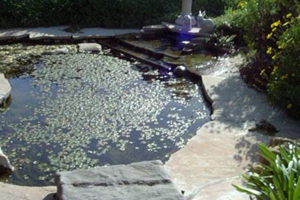 pond_work4